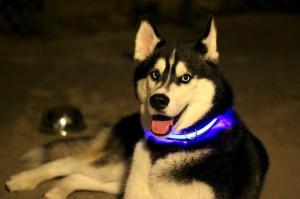 Halo - Dog